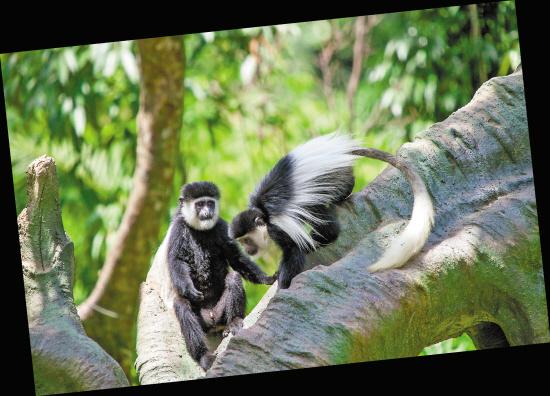 馆内延续森林主题,游客可以通过高科技互动技术深入了解动物世界.