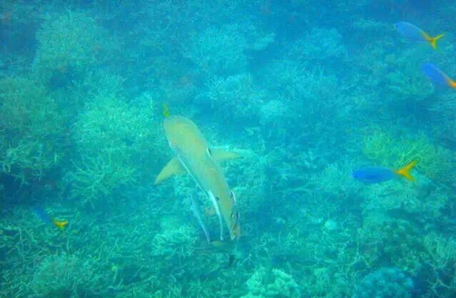 潜入深海 摊开帕劳海底世界地图