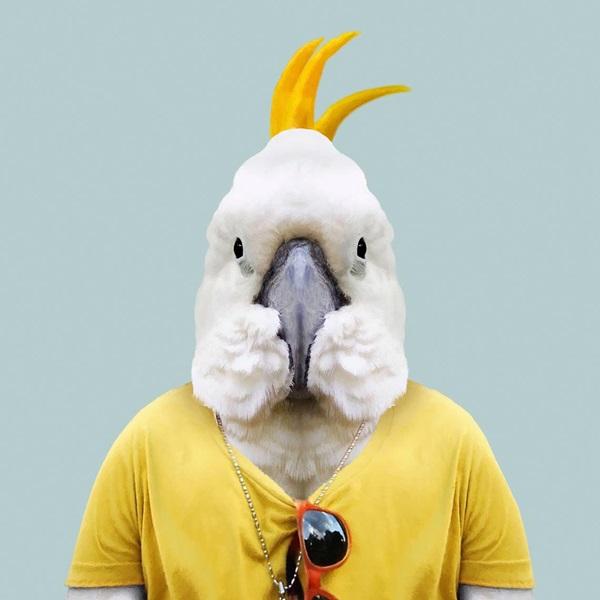 --> 你熟悉西班牙摄影师Yago Partal创作的一组搞笑并且有创意的动物肖像(Zoo Portraits)吗?动物们穿着人类服装拍摄证件照,它们严肃认真的表情,既幽默又让人过目不忘,让我们联想到人类自己。  (本文配图的图片版权:昆士兰旅游及活动推广局) 近日,昆士兰旅游及活动推广局邀请Yago Partal为昆士兰州的12种澳大利亚本土动物打造动物肖像系列。带着红帽子的兔耳袋狸(Greater Bilby)、一副休闲度假风的绿海龟(Green Sea Turtle)、霸气十足的咸水鳄(Saltw