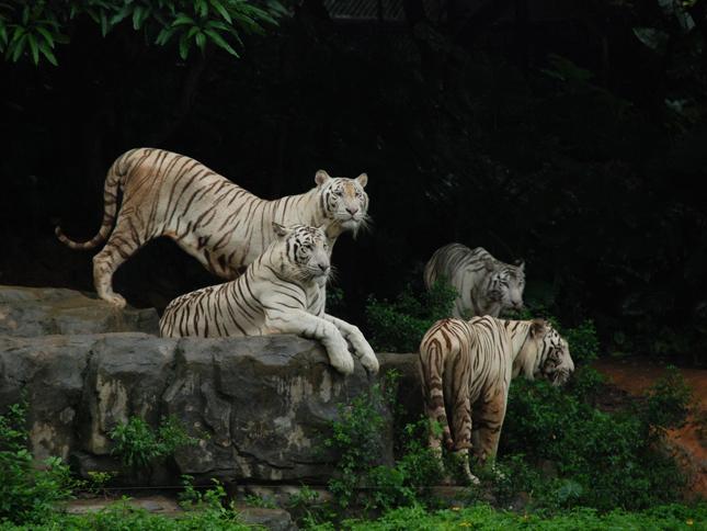 【香江野生动物世界】|香江野生动物世界攻略|景点