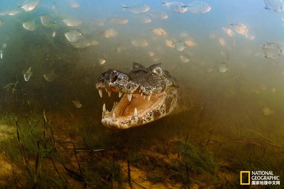 巴西冒险之旅:带你玩转潘塔纳尔湿地