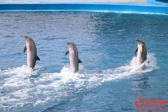 15海豚表演中融入了宣传教育.JPG