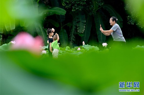 (环境)(1)福州:赏荷正当时