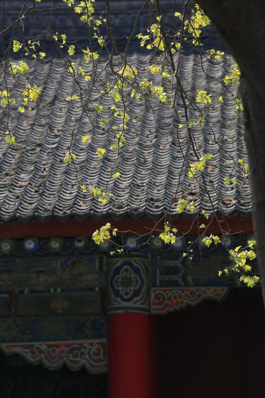 【春光好·古都篇】春唤游人意,西北望长安
